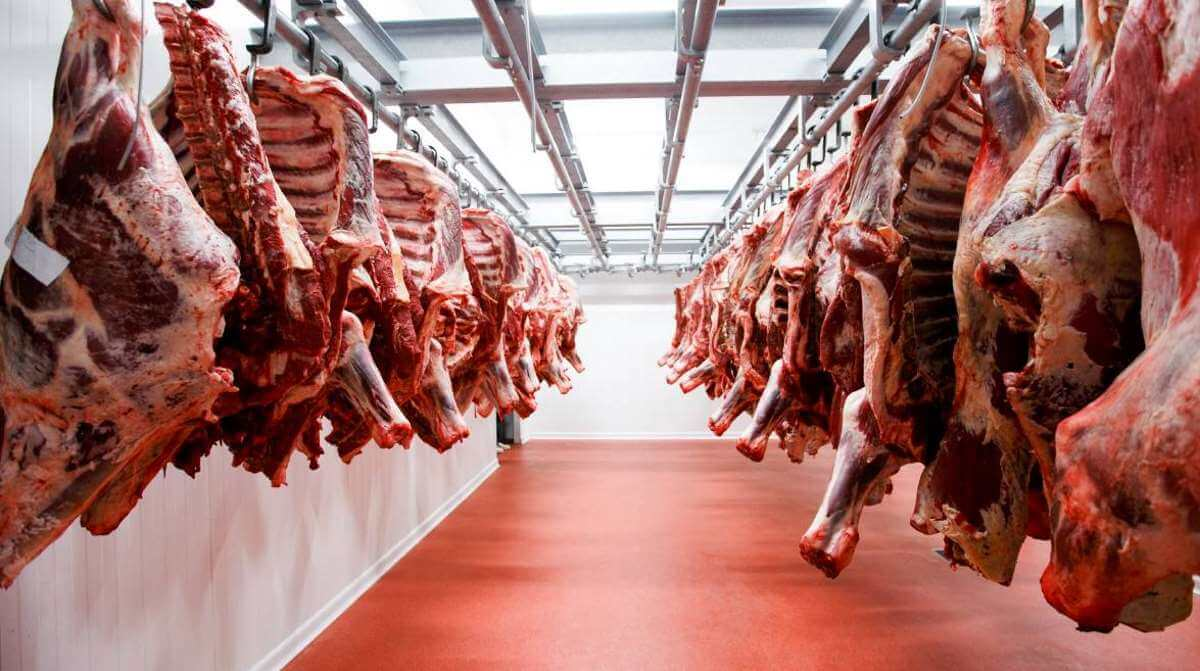 QUEENSLAND ABATTOIR accident