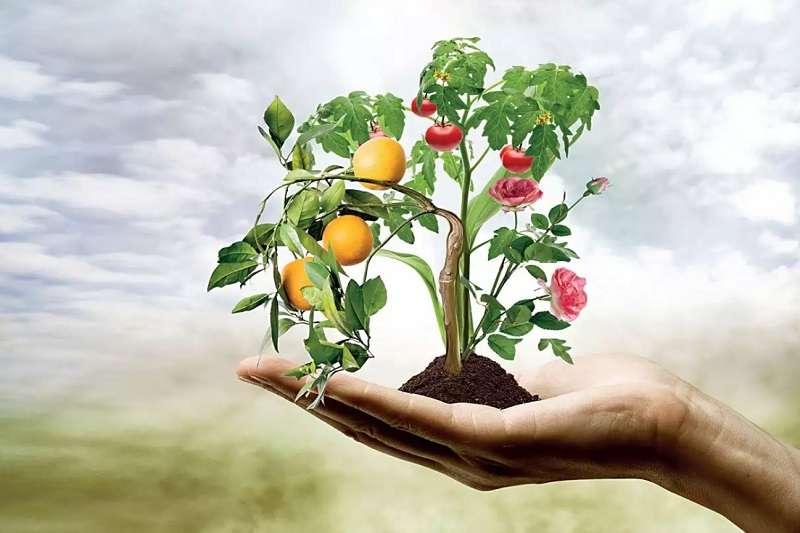 certificate II in horticulture course
